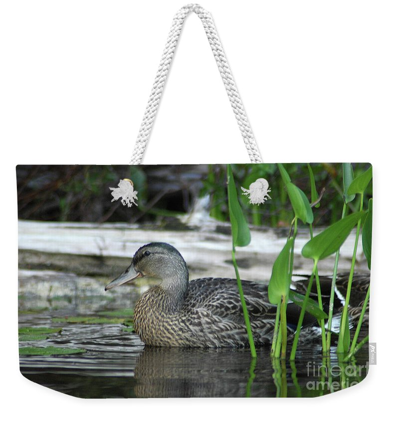 Duck Weekender Tote Bag featuring the photograph Sitting Still by Steve Cost