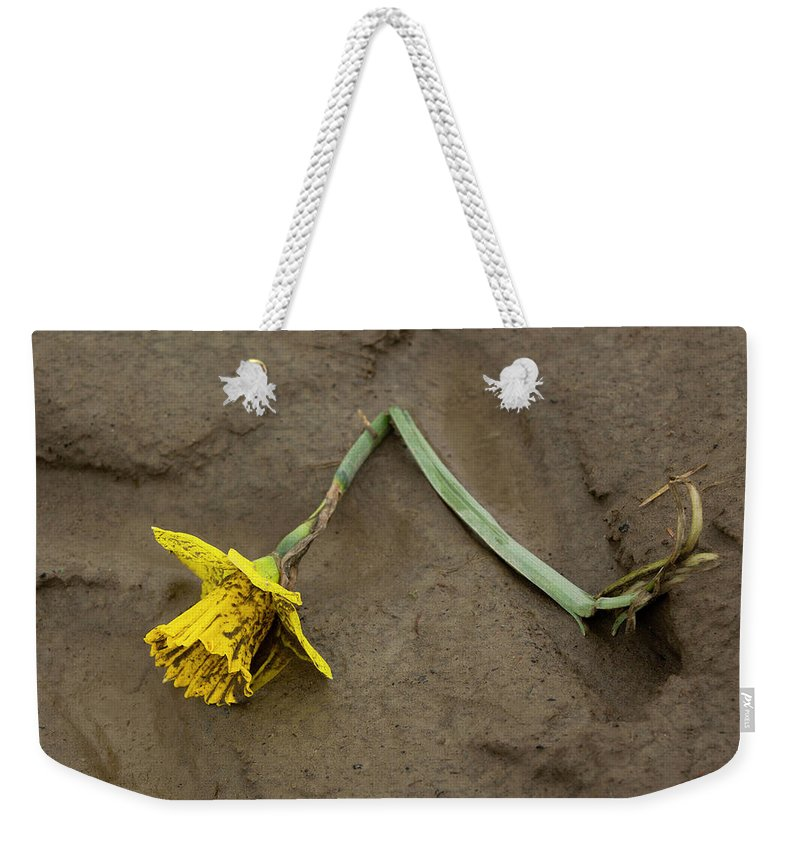 Daffodil Weekender Tote Bag featuring the photograph Skagit Valley Roadkill by Bob Stevens