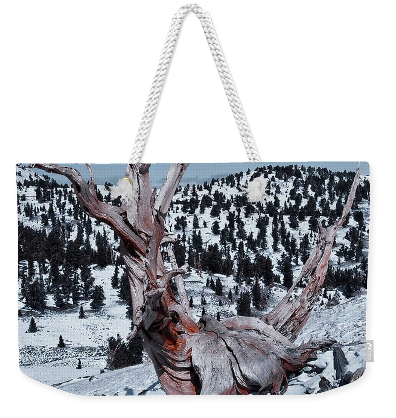 Skating Pine Weekender Tote Bag featuring the photograph Skating Pine by Mae Wertz