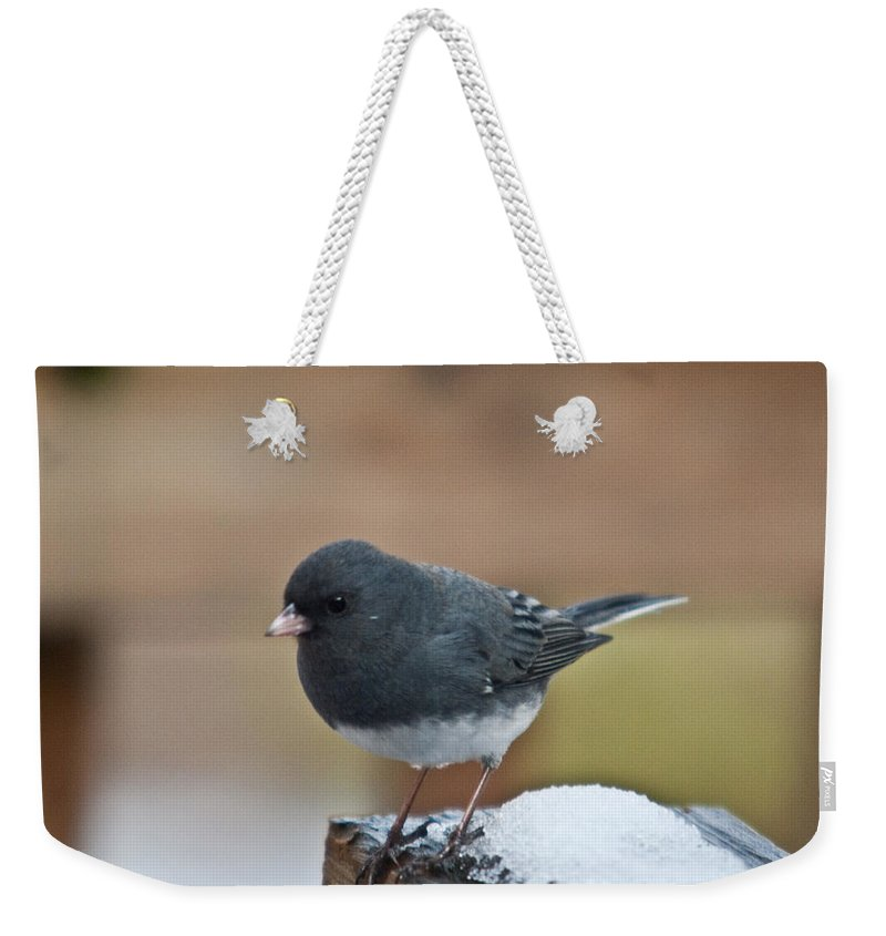Cumberand Weekender Tote Bag featuring the photograph Slate Junco Feeding In Snow by Douglas Barnett