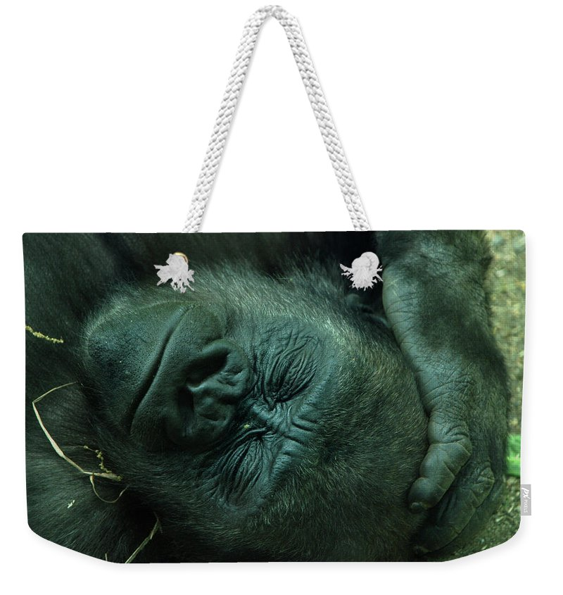 Gorilla Weekender Tote Bag featuring the photograph Sleep Tight by Richard Bryce and Family