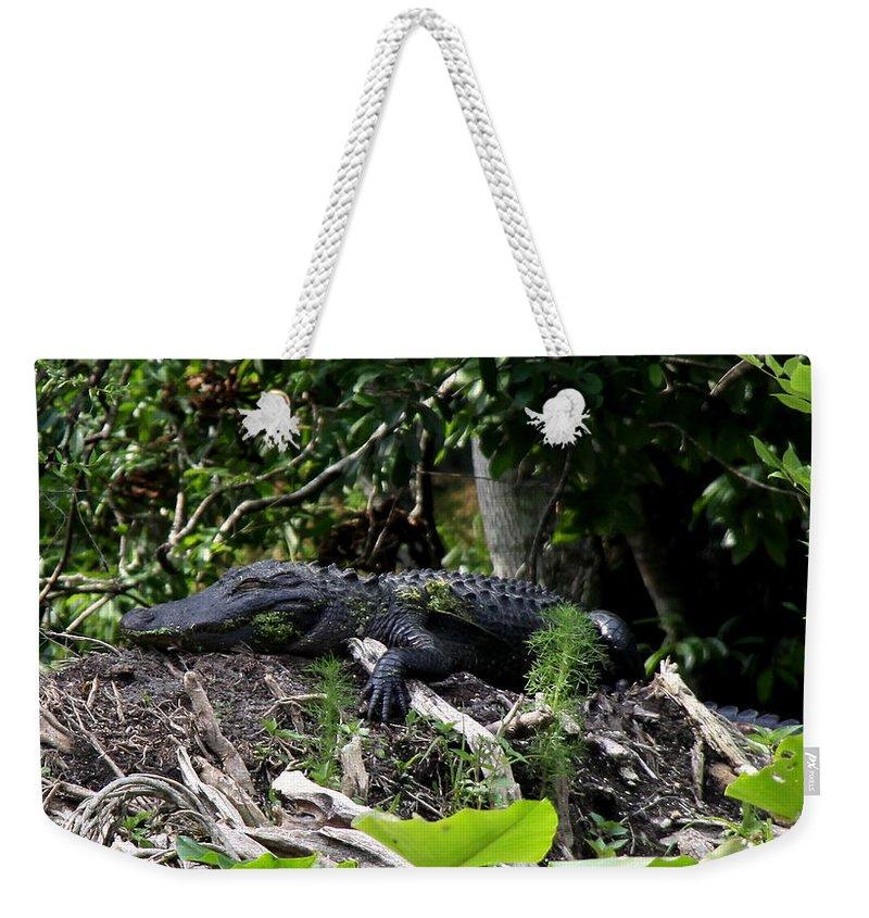 American Alligator Weekender Tote Bag featuring the photograph Sleeping Alligator by Barbara Bowen