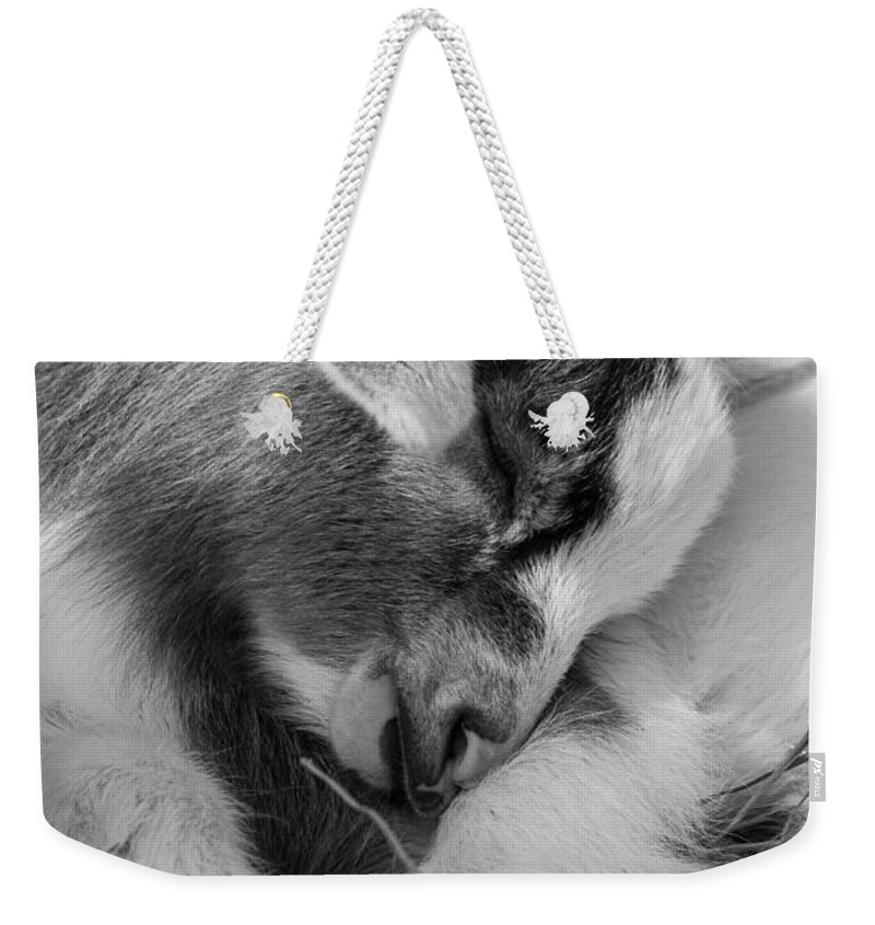 Big Cat Habitat Weekender Tote Bag featuring the photograph Sleeping Baby, Black And White by Liesl Walsh