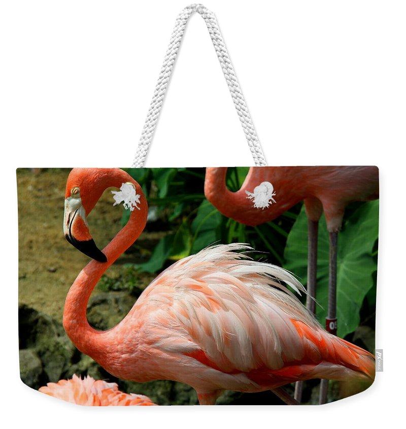 Pink Flamingo Weekender Tote Bag featuring the photograph Sleeping Flamingo by Barbara Bowen