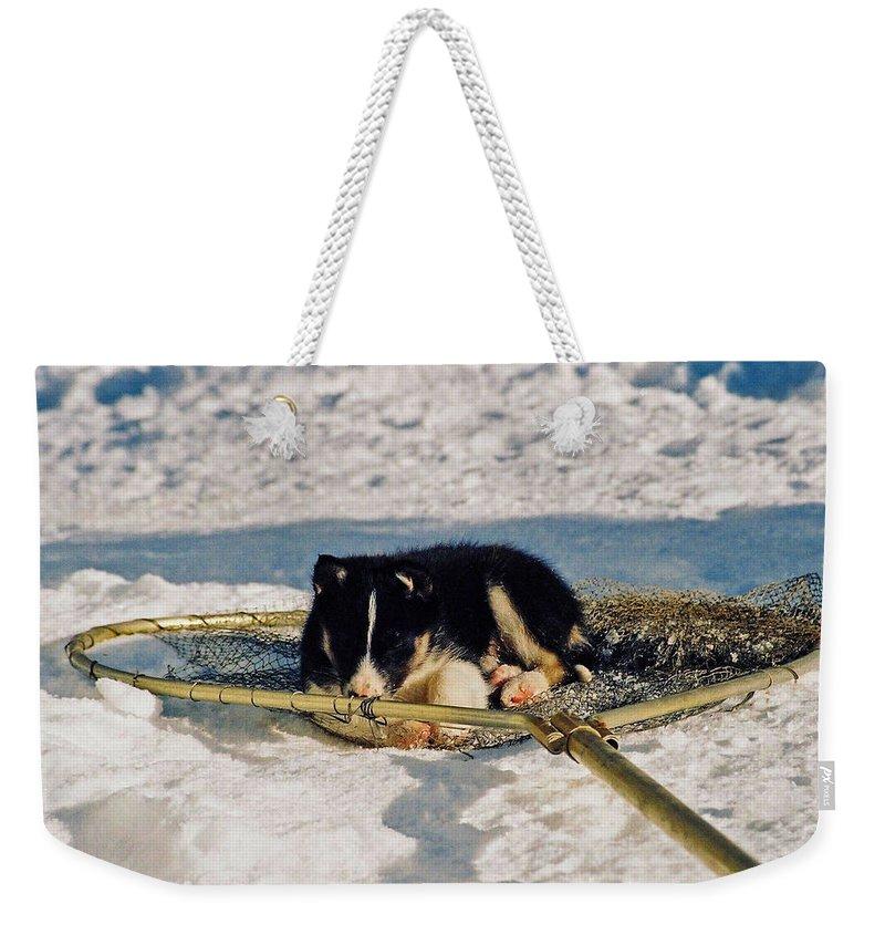 Alaska Weekender Tote Bag featuring the photograph Sleeping Puppy by Juergen Weiss