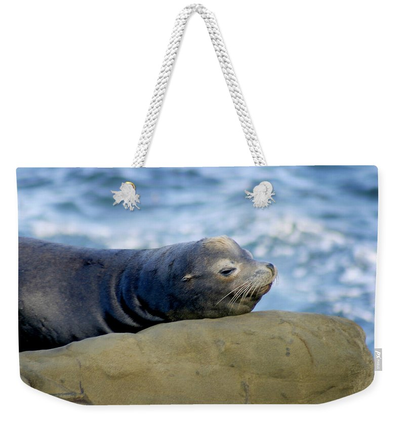 Seal Lion Weekender Tote Bag featuring the photograph Sleeping Sea Lion by Anthony Jones