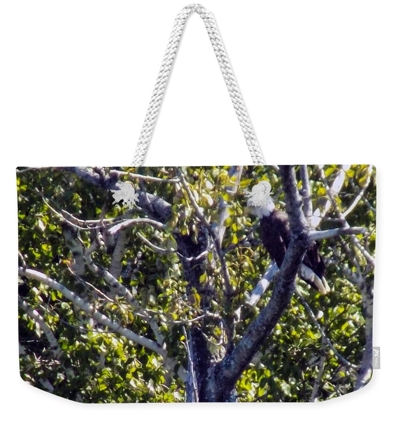 Bald Eagles Weekender Tote Bag featuring the photograph Sleepy Eagle by William Tasker