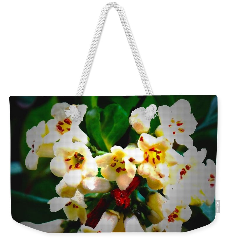 Flowers Weekender Tote Bag featuring the photograph Small White Flowers by Steven Canizales