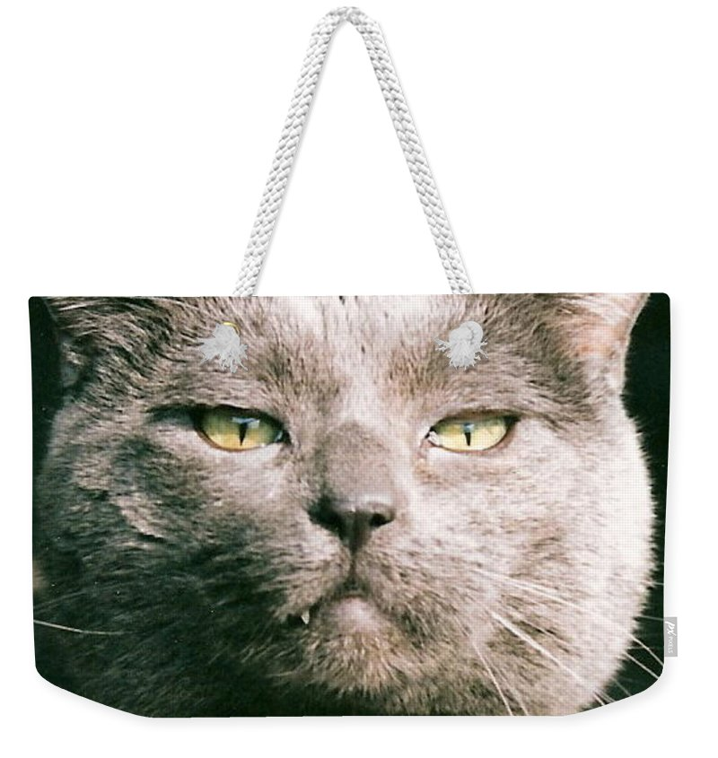 Cat Weekender Tote Bag featuring the greeting card Smokey by Lauri Novak