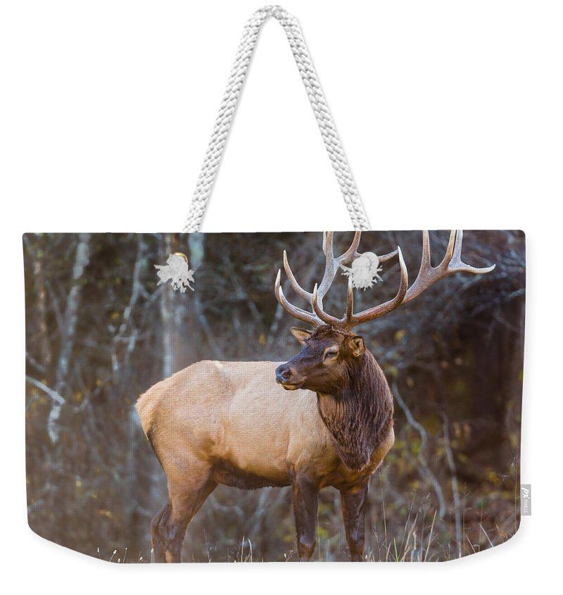 Elk Weekender Tote Bag featuring the photograph Smoky Mountain Elk II - North Carolina's Cataloochee Valley Wildlife by Bill Swindaman