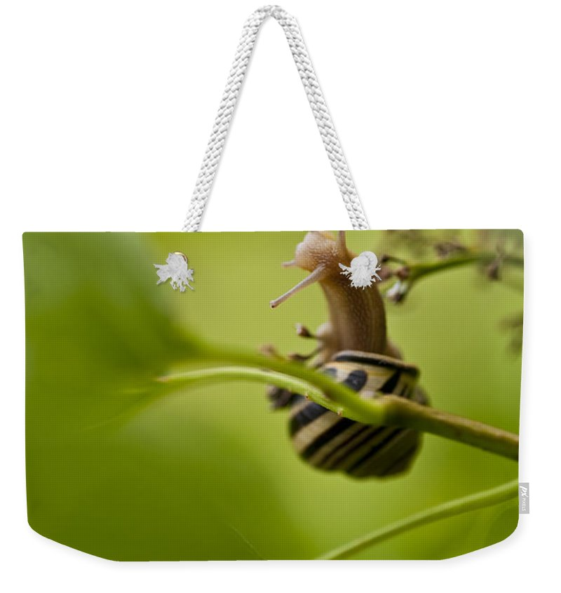 Pacific Northwest Weekender Tote Bag featuring the photograph Snail Climbing Lilac Bush by Jim Corwin
