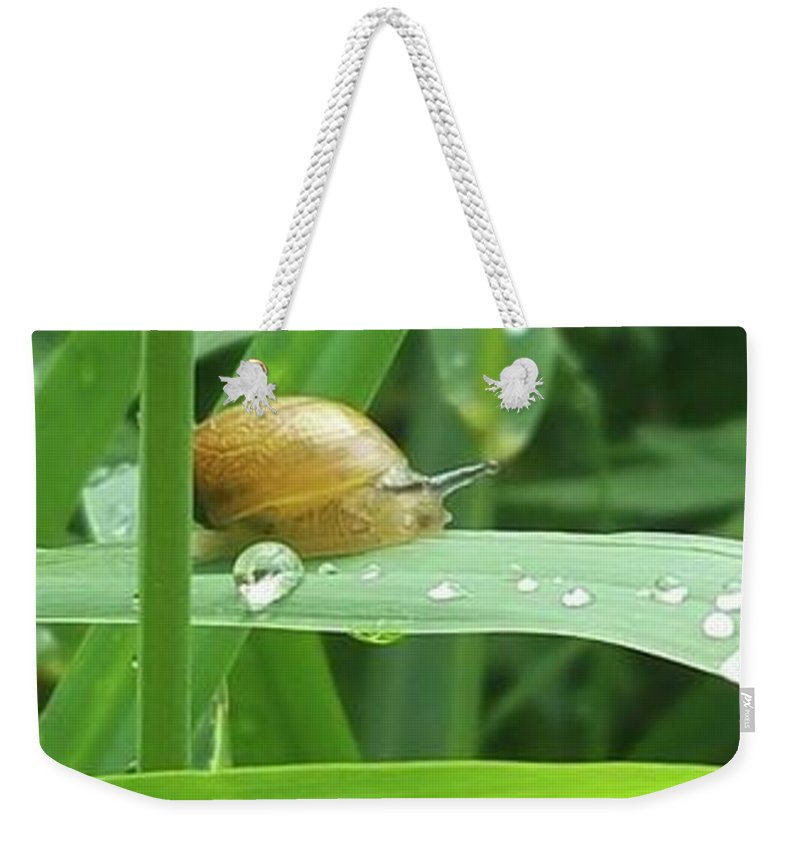 Weekender Tote Bag featuring the photograph Snail by Jessica Murphy