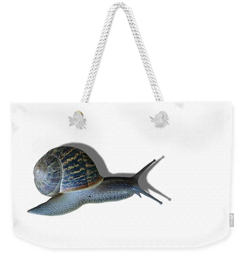 Snail Weekender Tote Bag featuring the photograph Snail Mail by Kristin Elmquist