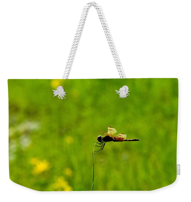 Snake Weekender Tote Bag featuring the photograph Snake Doctor Resting by Douglas Barnett