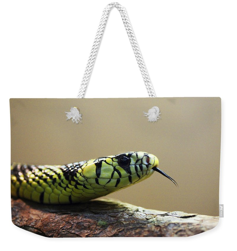Snake Weekender Tote Bag featuring the photograph Snake Tongue by Marilyn Hunt