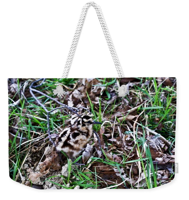 Snipe Weekender Tote Bag featuring the photograph Snipe In Camouflage 2 by Douglas Barnett