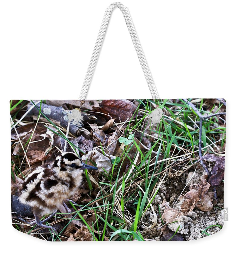 Snipe Weekender Tote Bag featuring the photograph Snipe In Camouflage by Douglas Barnett