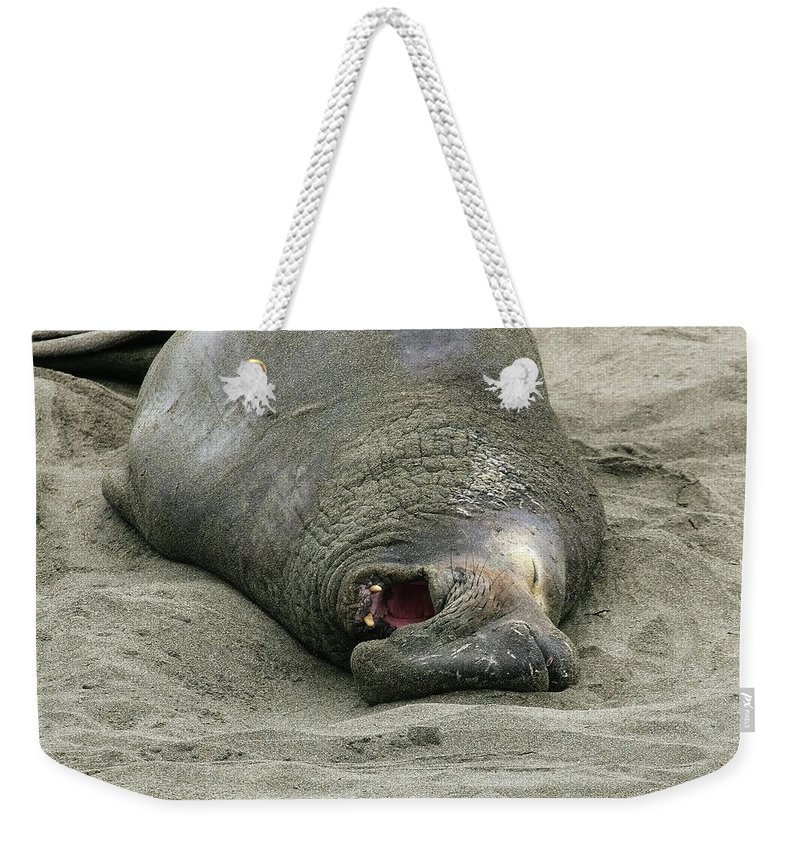 Elephant Weekender Tote Bag featuring the photograph Snoring Elephant Seal by Anthony Jones
