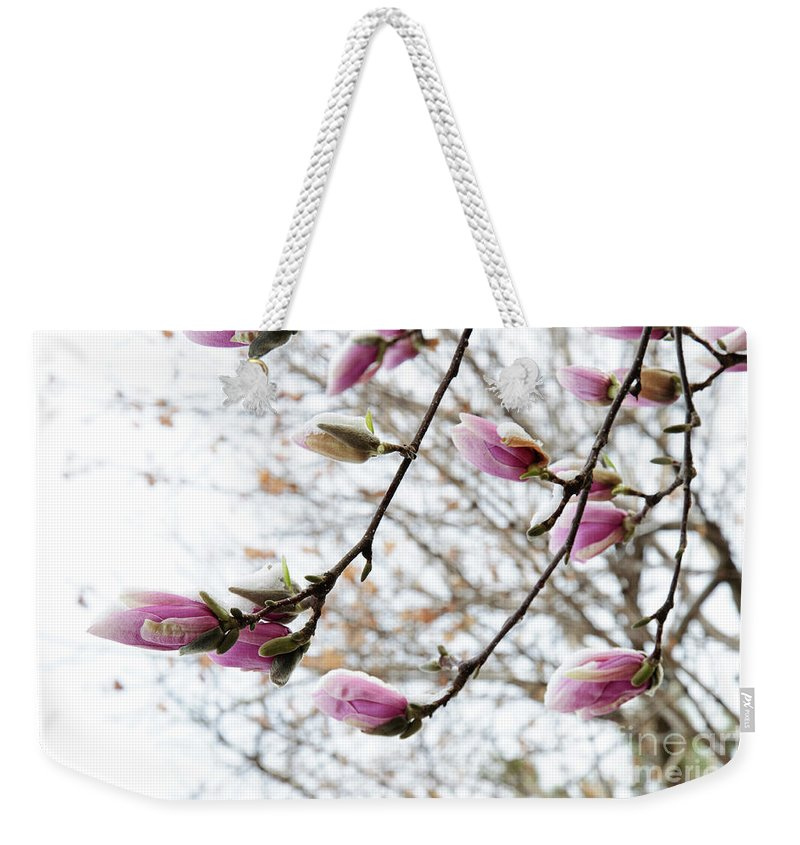 Snow Capped Magnolia Tree Blossoms Weekender Tote Bag featuring the photograph Snow Capped Magnolia Tree Blossoms 2 by Andee Design