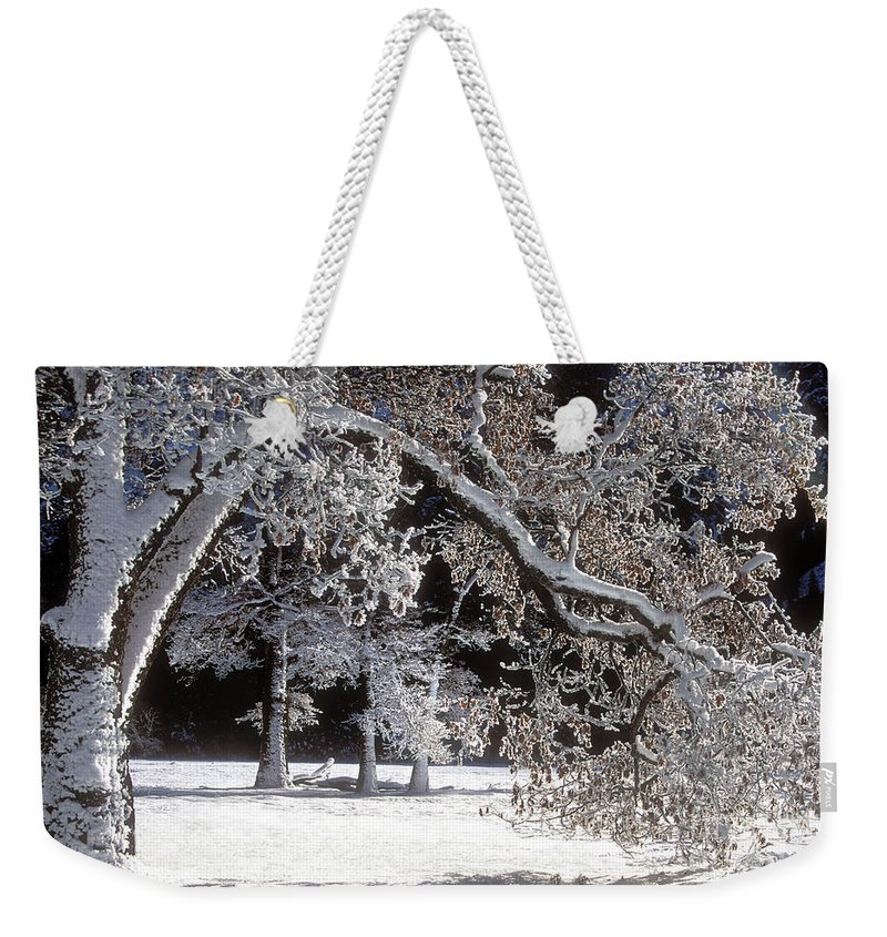 Black Oak Weekender Tote Bag featuring the photograph Snow Covered Black Oak Yosemite National Park by Dave Welling