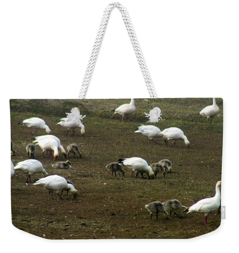 Snow Geese Weekender Tote Bag featuring the photograph Snow Geese by Anthony Jones