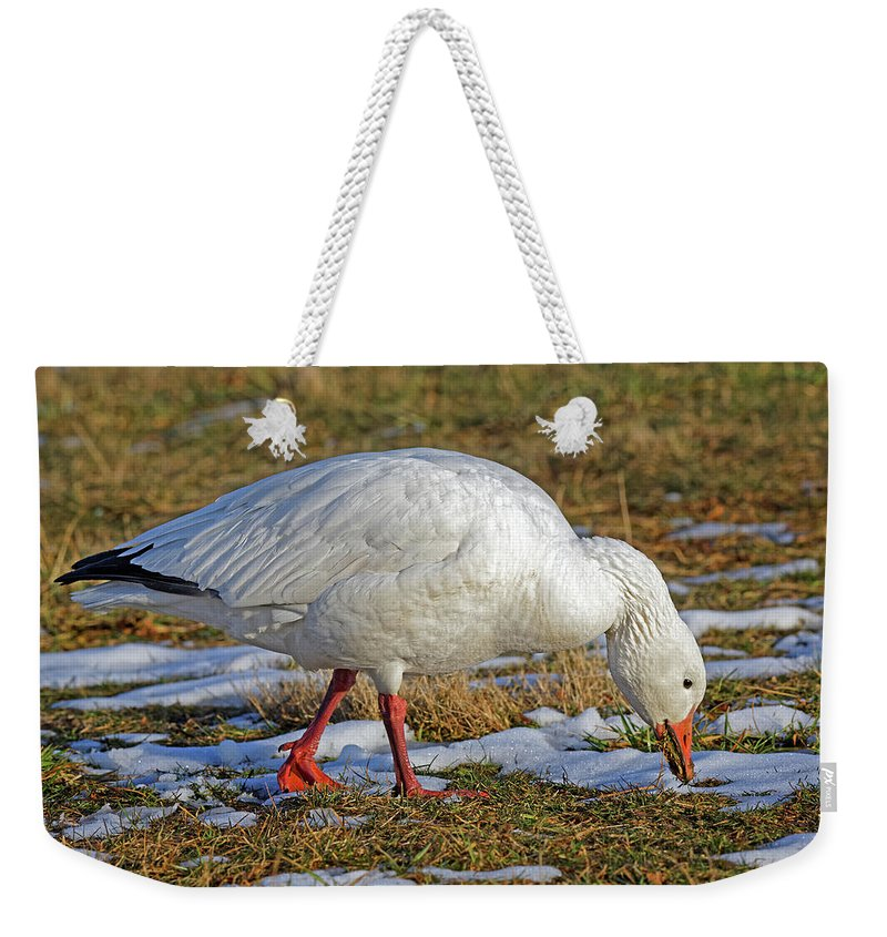 Snow Goose Weekender Tote Bag featuring the photograph Snow Goose Feeding In A Field by Delmas Lehman