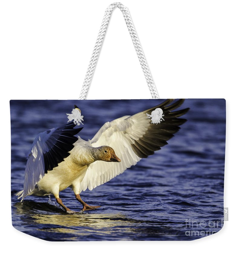 Oie Des Neiges Weekender Tote Bag featuring the photograph Snow Goose2 by Marie Elise Mathieu