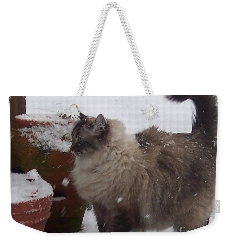 Cats Weekender Tote Bag featuring the photograph Snow Kitty by Debbi Granruth