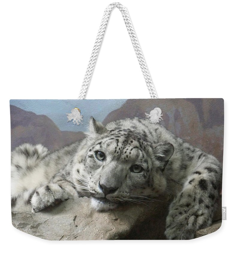 Snow Leopards Weekender Tote Bag featuring the photograph Snow Leopard Relaxing by Ernie Echols