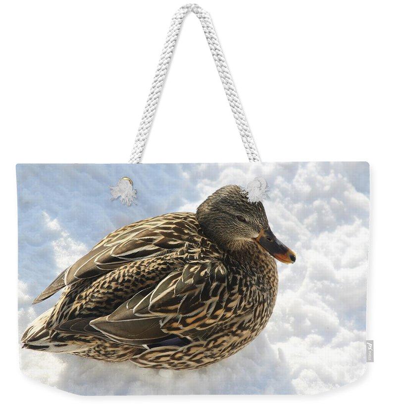 Mallard Weekender Tote Bag featuring the photograph Snow Mallard by Lauri Novak