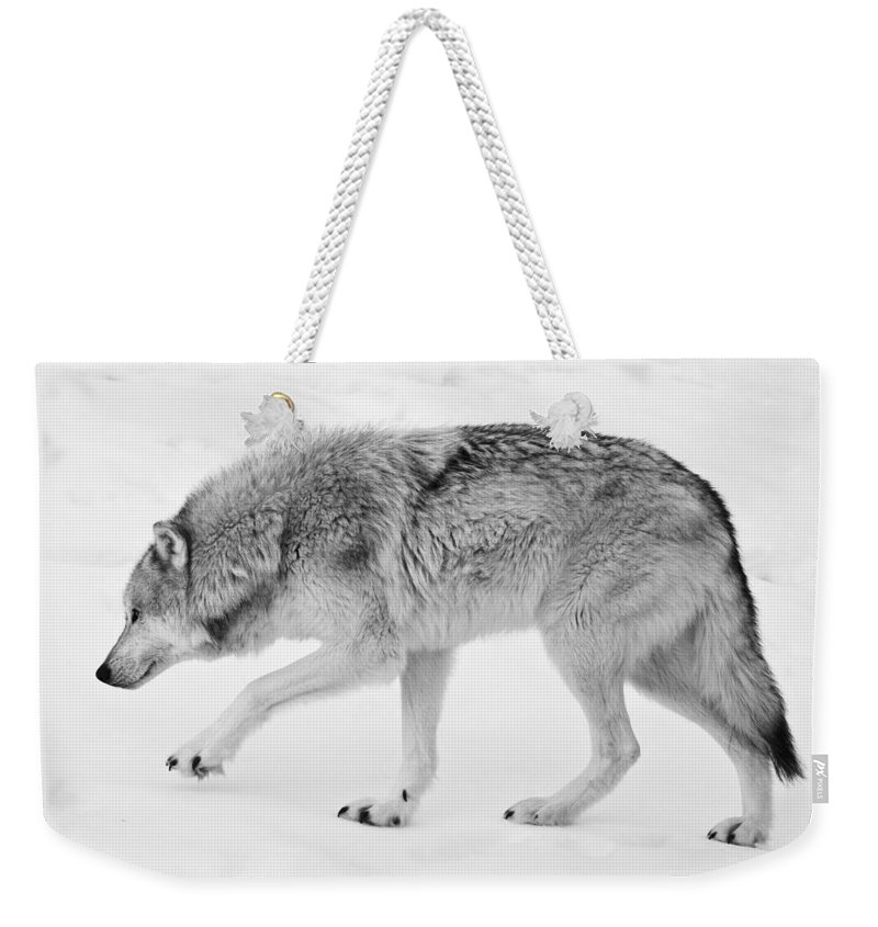 Wolves Weekender Tote Bag featuring the photograph Snow Prowler Bw by Athena Mckinzie