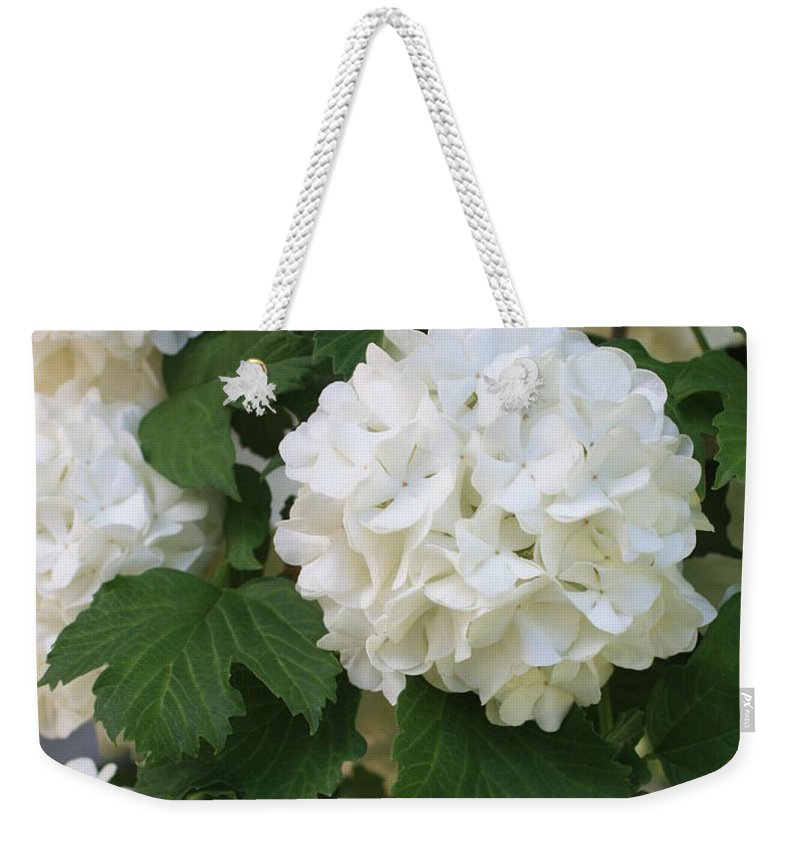 Snowball Tree Weekender Tote Bag featuring the photograph Snowball Tree With Delicate Leaves by Carol Groenen