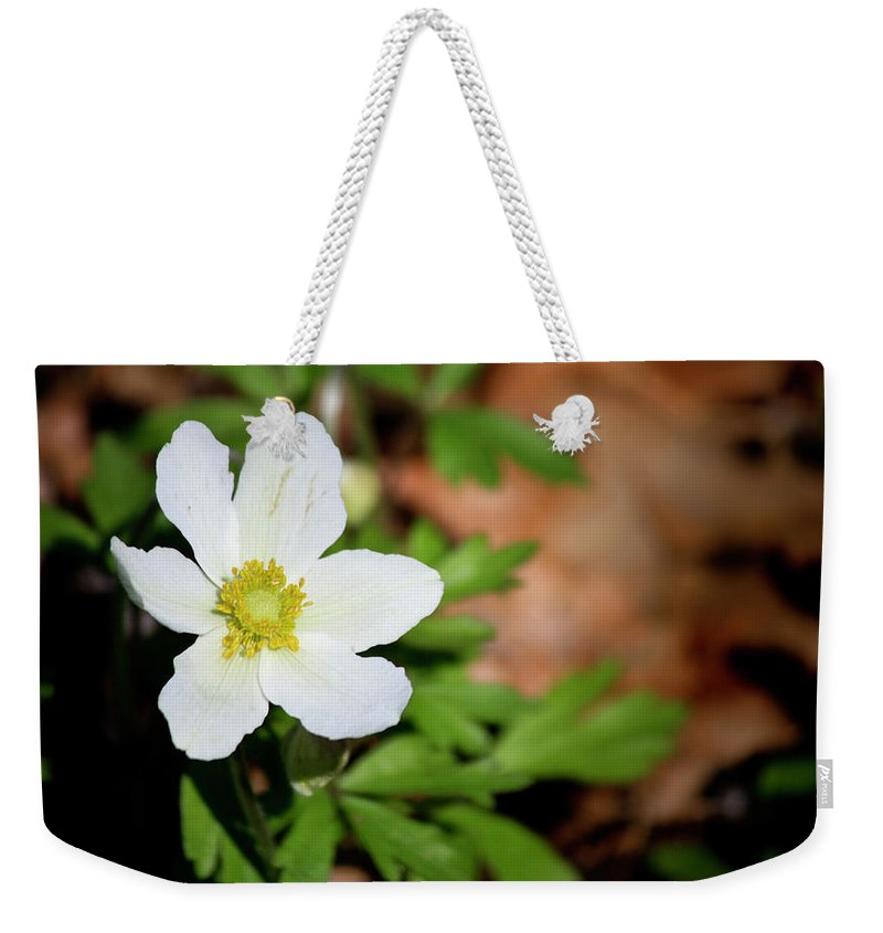 Snowdrop Weekender Tote Bag featuring the photograph Snowdrop Anemone by Teresa Mucha