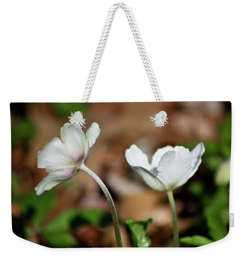 Snowdrop Weekender Tote Bag featuring the photograph Snowdrop Anemones by Teresa Mucha