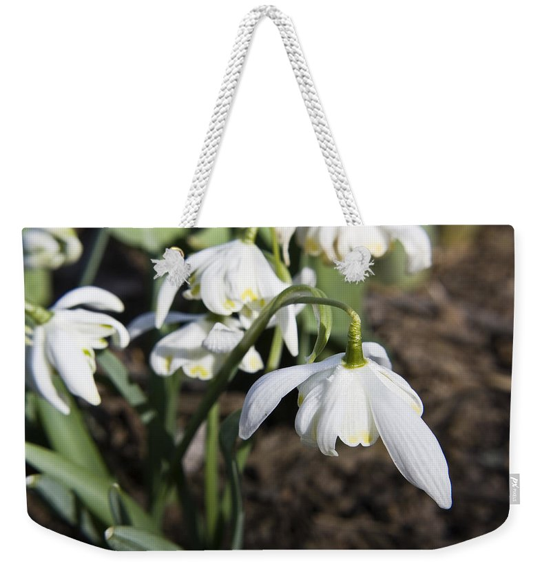 Snowdrops Weekender Tote Bag featuring the photograph Snowdrops by Teresa Mucha