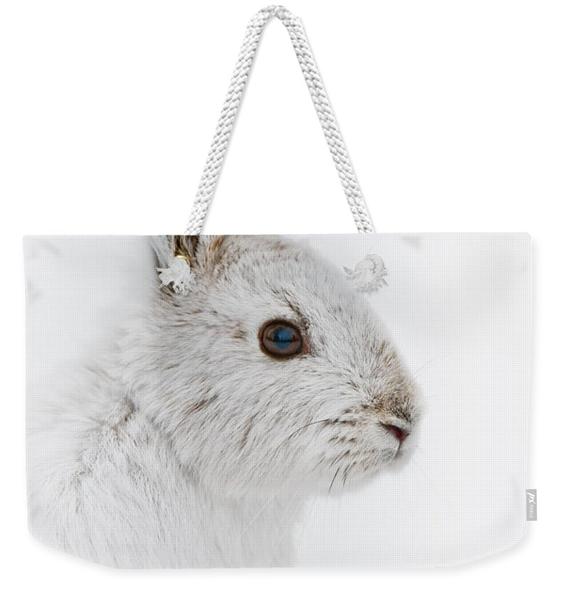 Snowshoe Hare Weekender Tote Bag featuring the photograph Snowshoe Hare Pictures 146 by World Wildlife Photography