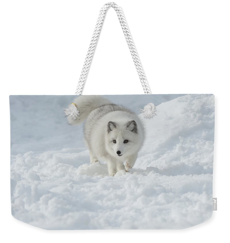 Wildlife Weekender Tote Bag featuring the photograph Snowy Day Stroll by Sandra Bronstein