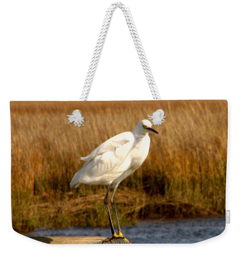 Bird Egret snowy Egret white Egret Seabird Animals Nature Wildlife Weekender Tote Bag featuring the photograph Snowy Egret 3 by J M Farris Photography