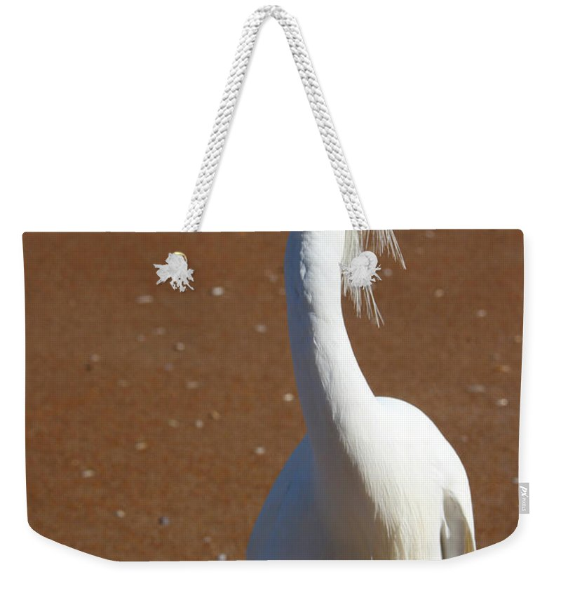 Bird Beach Sand White Bright Yellow Curious Egret Long Neck Feather Eye Ocean Weekender Tote Bag featuring the photograph Snowy Egret by Andrei Shliakhau