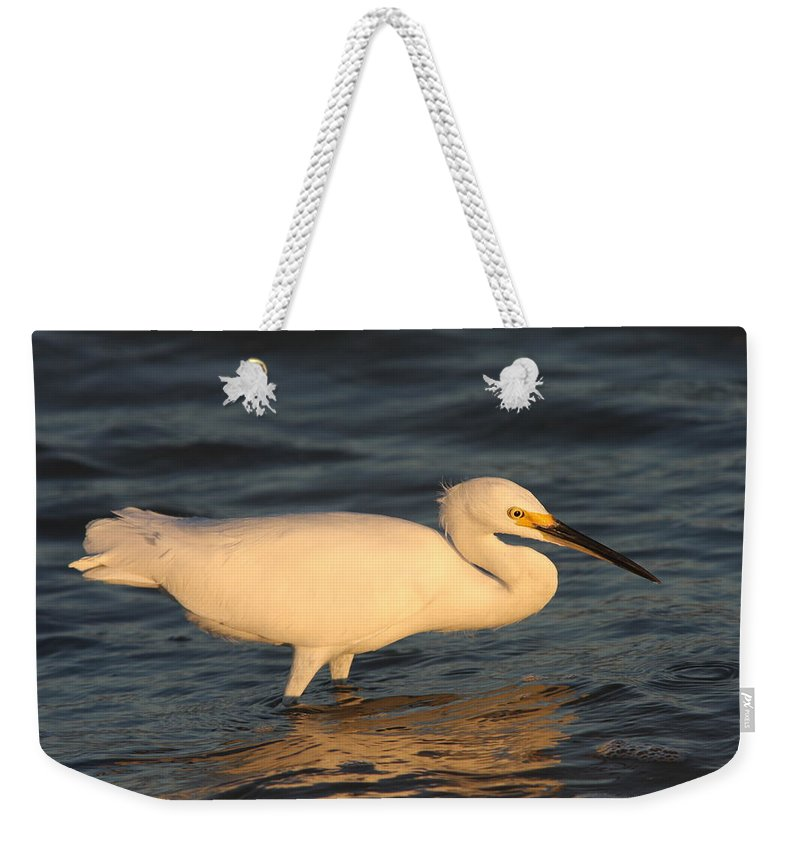 Egret Weekender Tote Bag featuring the photograph Snowy Egret By Sunset by Christiane Schulze Art And Photography