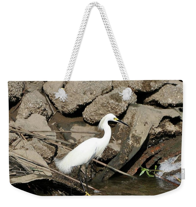 Snowy Egret Weekender Tote Bag featuring the photograph Snowy Egret Fishing by Al Powell Photography USA