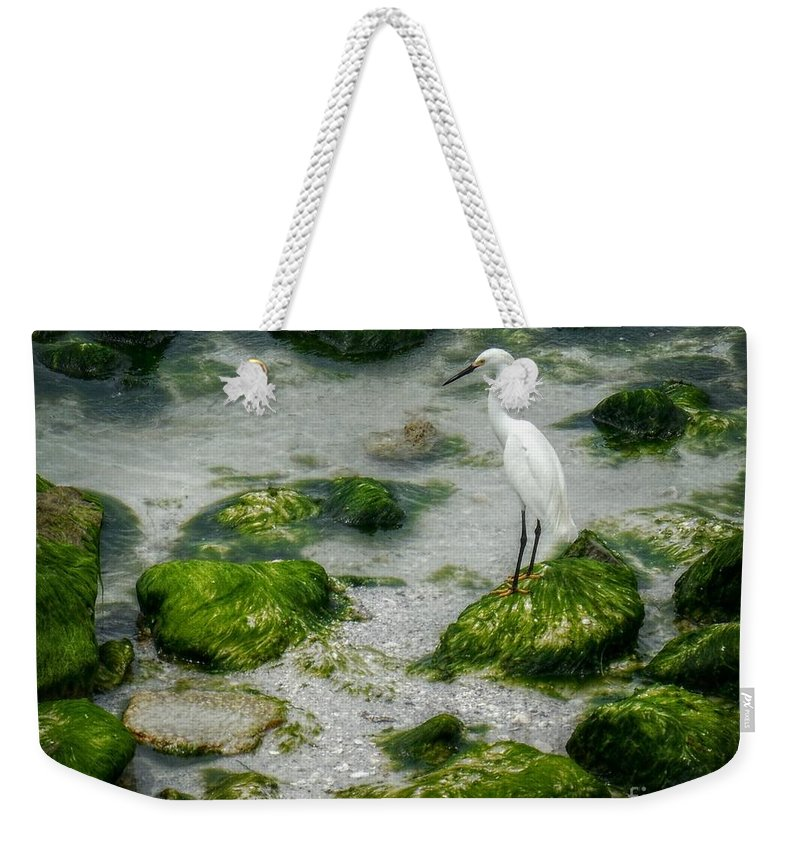 Egret Weekender Tote Bag featuring the photograph Snowy Egret On Mossy Rocks by Valerie Reeves