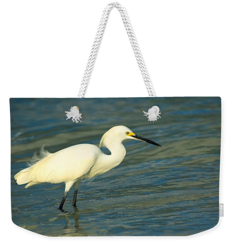 Animal Weekender Tote Bag featuring the photograph Snowy Egret by Rich Leighton