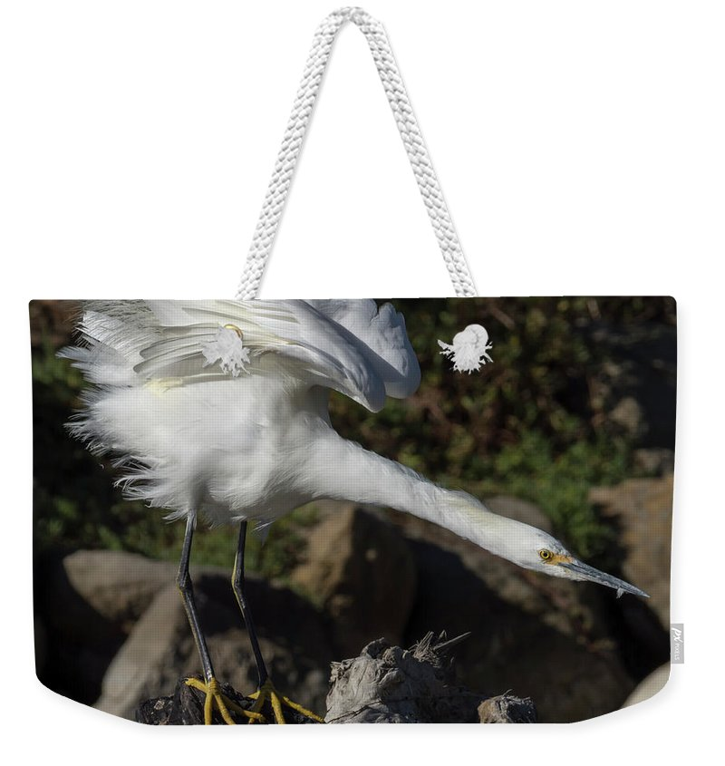 Birds Weekender Tote Bag featuring the photograph Snowy Egret Stretch by Bruce Frye