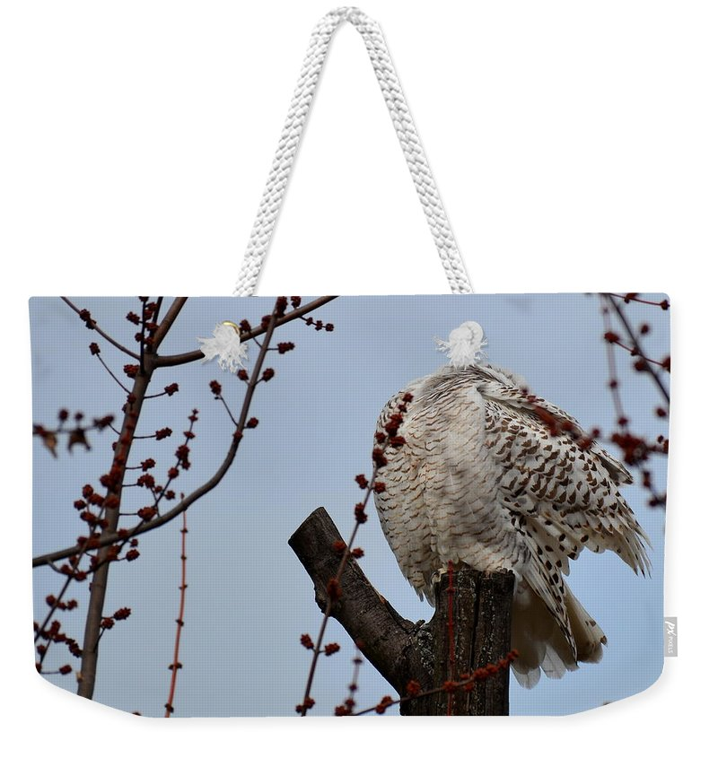 Snowy Owls Weekender Tote Bag featuring the photograph Snowy Owl Preening by Mark Madion