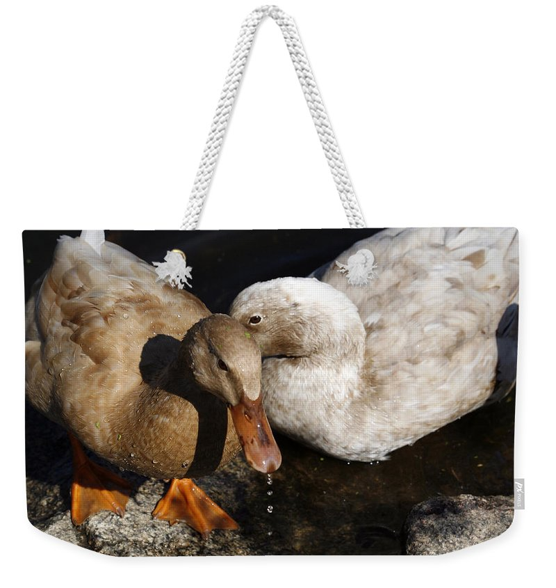Bird Weekender Tote Bag featuring the photograph Snuggles by Marilyn Hunt