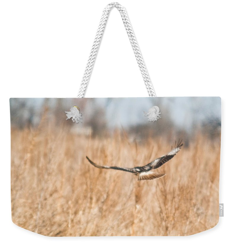 Hawk Weekender Tote Bag featuring the photograph Soaring Hawk Over Field by Douglas Barnett