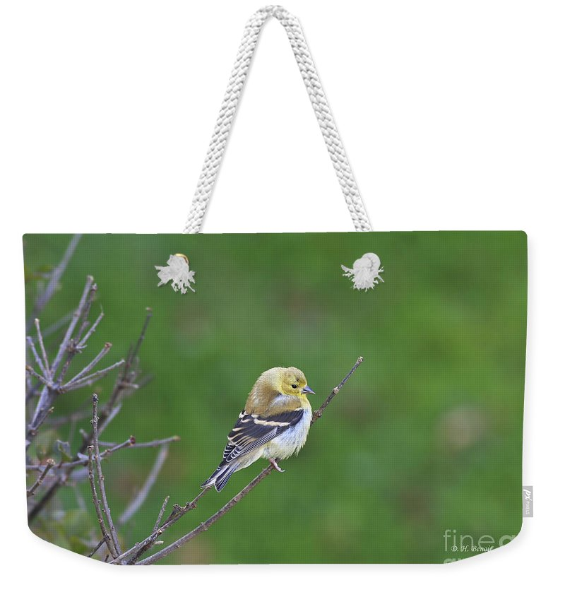 Bird Weekender Tote Bag featuring the photograph Soft And Fluffy by Deborah Benoit
