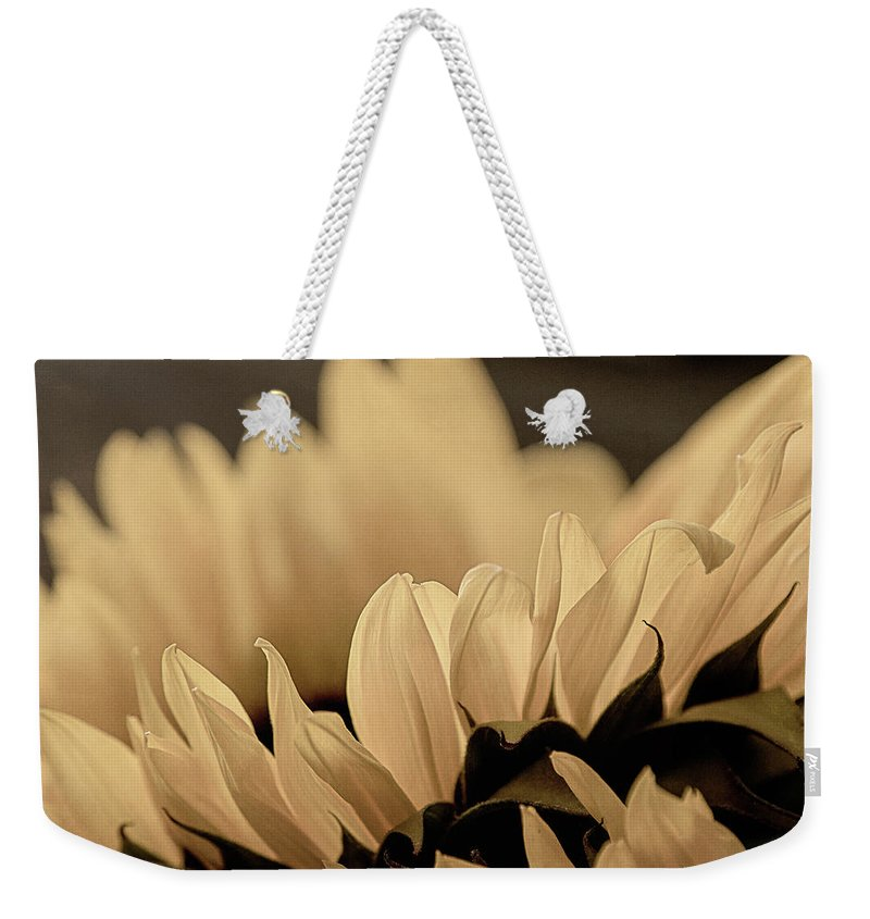 Nature Weekender Tote Bag featuring the photograph Soft Summer Light 3 by Teresa Wilson