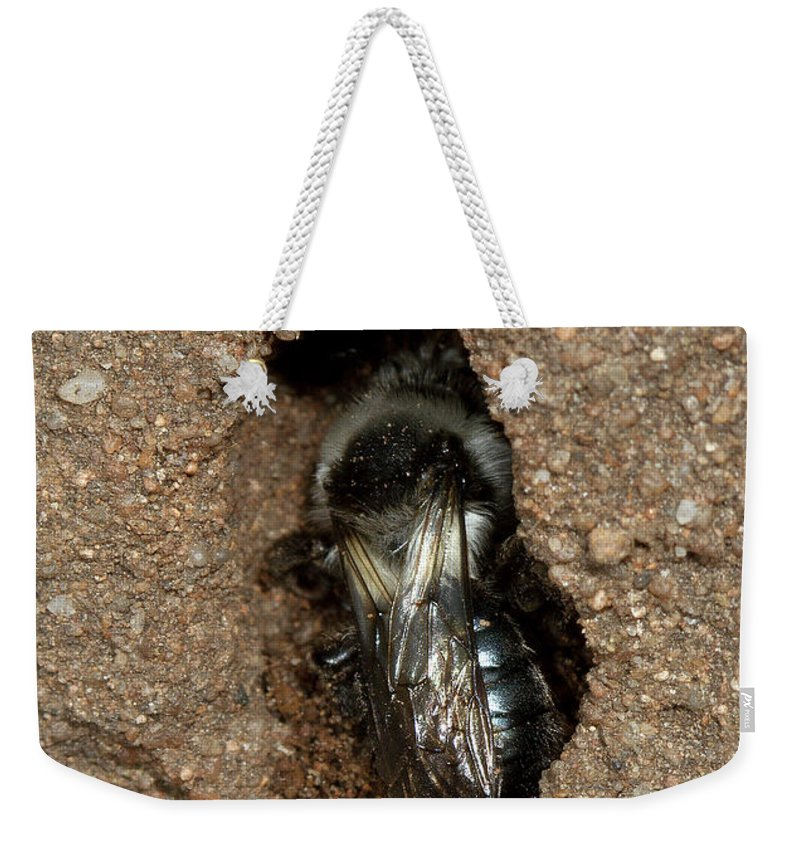 Solitary Bee Weekender Tote Bag featuring the photograph Solitary Bee Andrena Cinearia by Bob Kemp